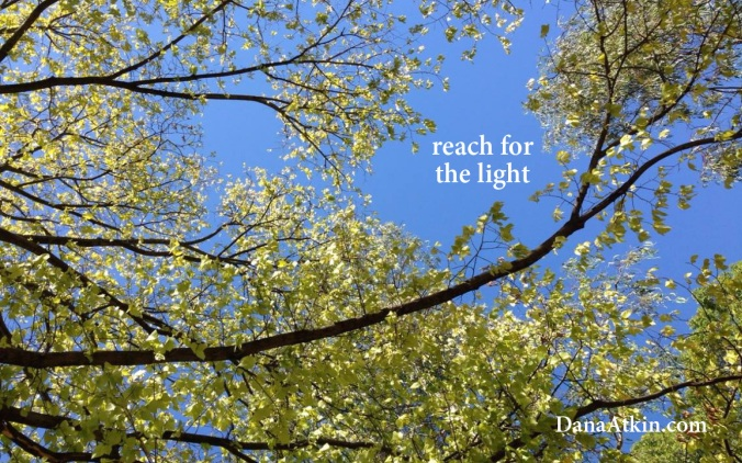 Reach for the light Dana Atkin Kinesiology