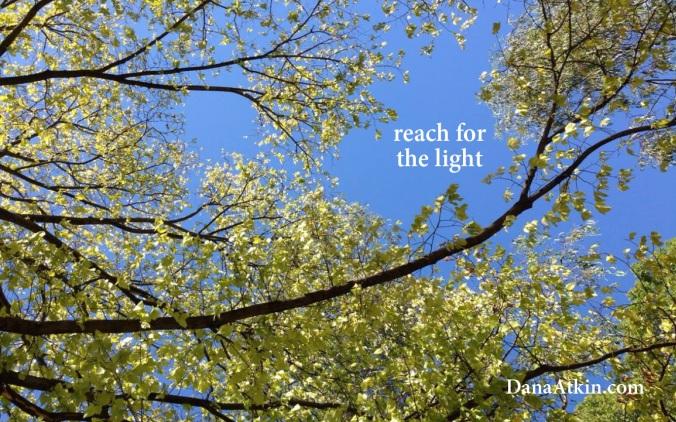 Reach for the light Dana Atkin Kinesiology